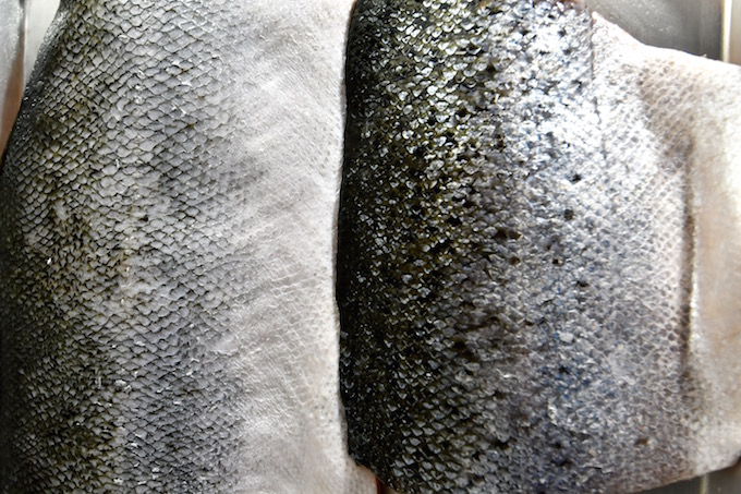 Descaled salmon fillet