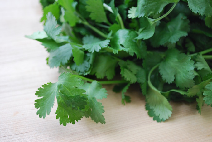 Bunch of cilantro.