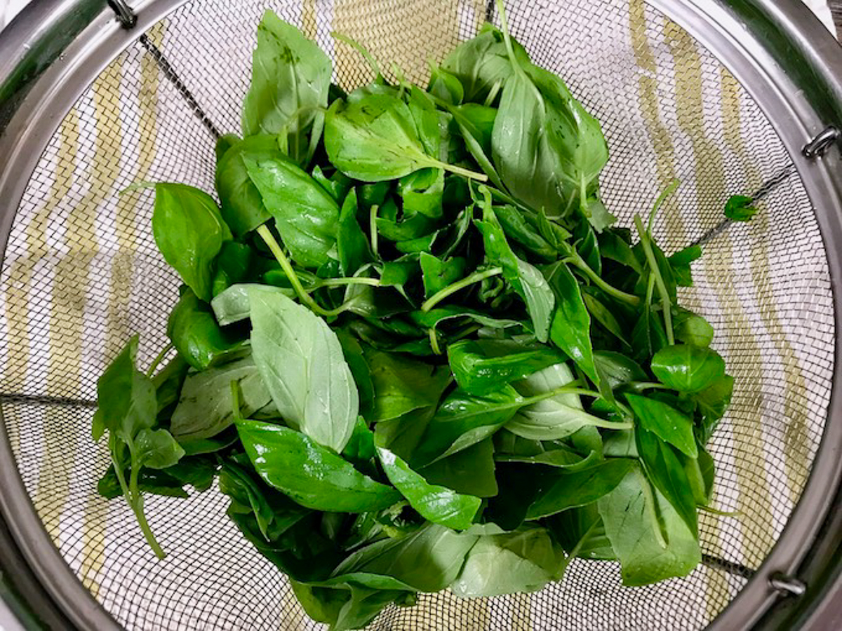 Fresh basil leaves in a colander.