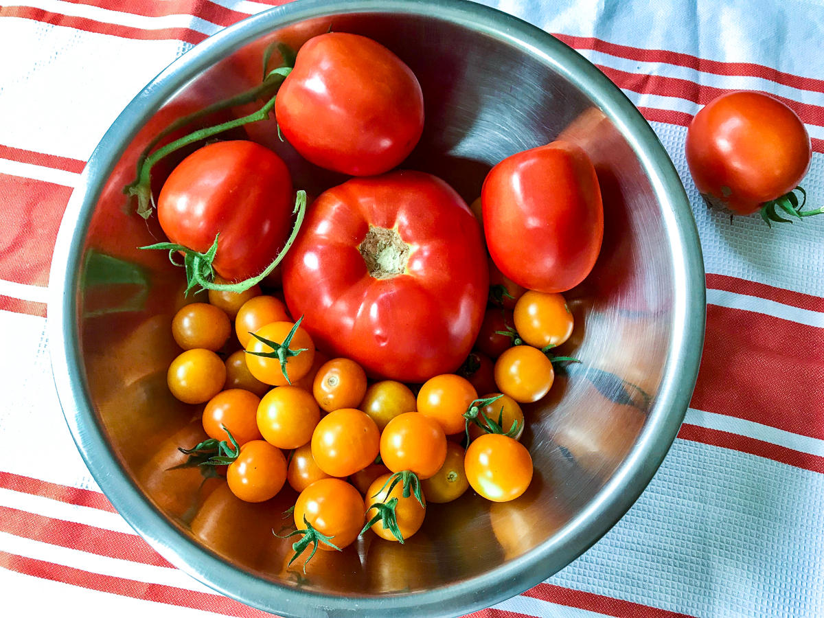 Fresh picked garden tomatoes in a stainless steel bowl.
